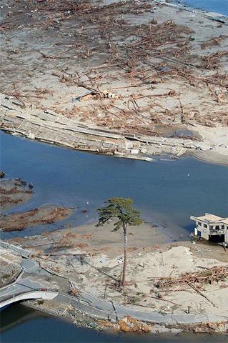 Japan Tsunami Tree.01c1