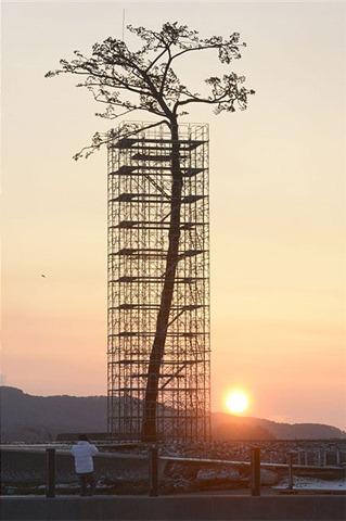Japan Tsunami Tree.01c2