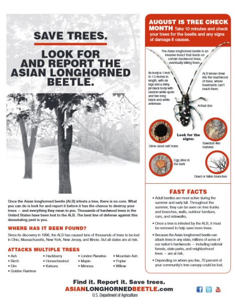 Asian Longhorned Beetle.03