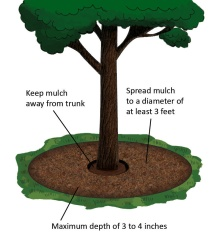 Tree Mulch.01