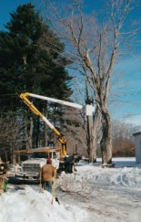 winter-tree-work