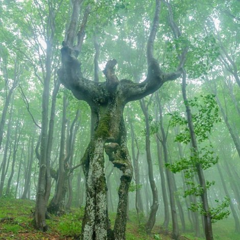Tree ENT or Groot - Bulgaria 2016-06-02.01